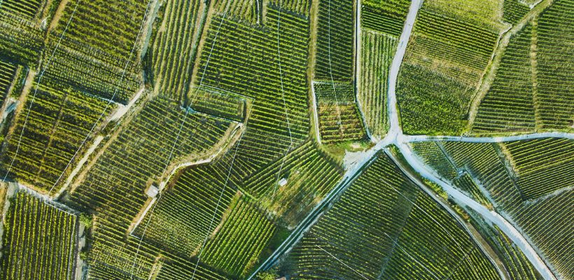 Forskellen på Barolo og Barbaresco og Nebbiolo-vine.